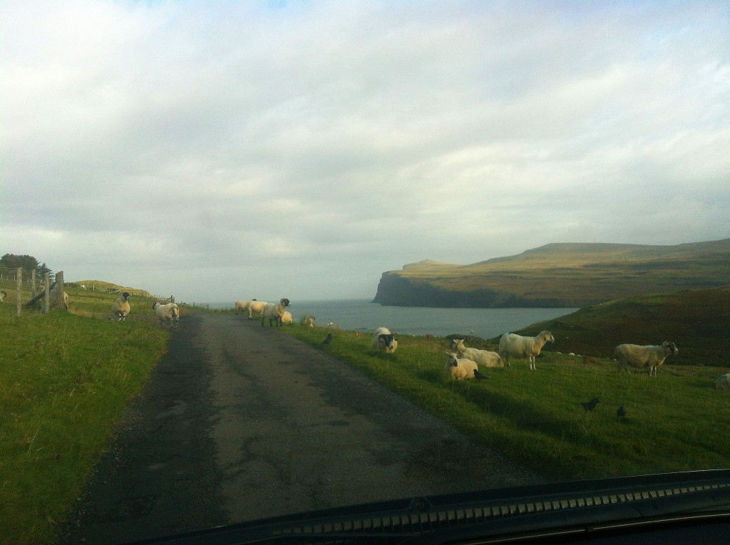 Sheep on the road Isle of Skye weekend