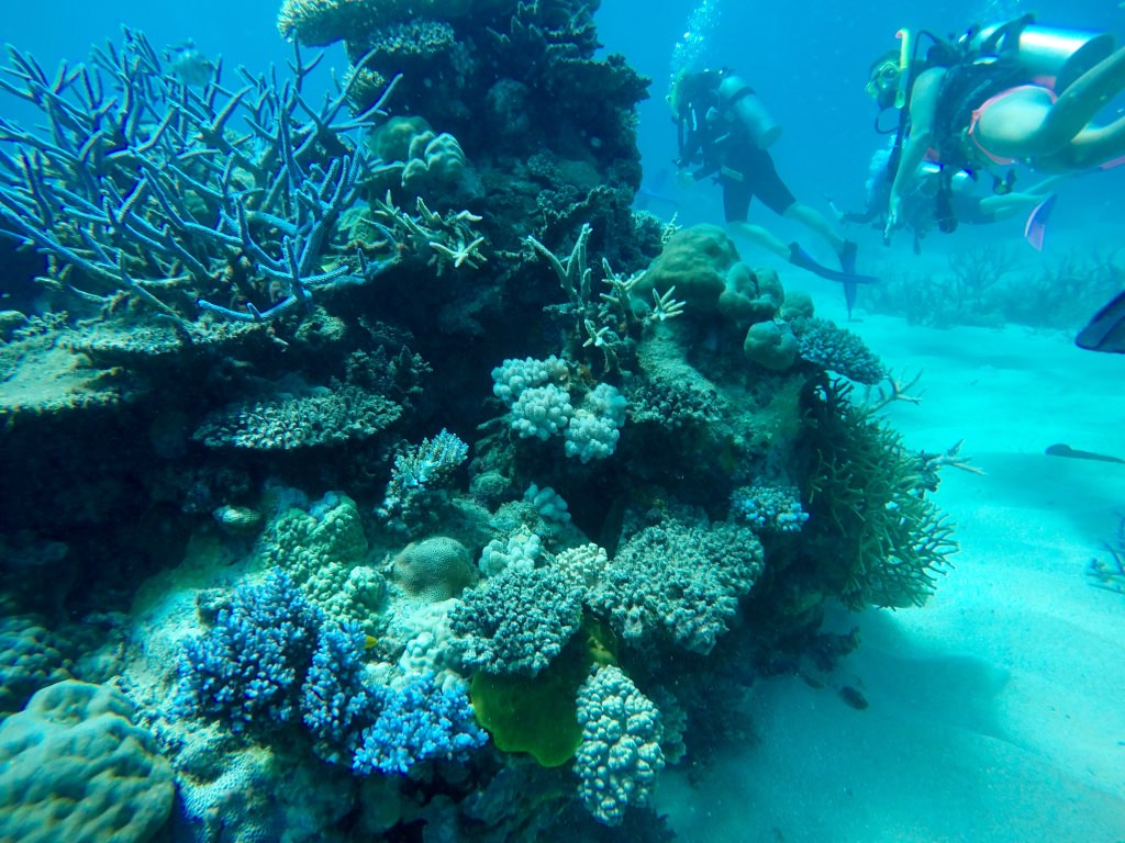Learning to dive on the great barrier reef migrating miss - Best place to dive the great barrier reef ...