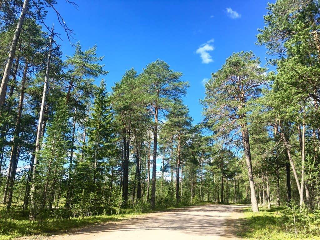 Tree Hotel Lulea Sweden