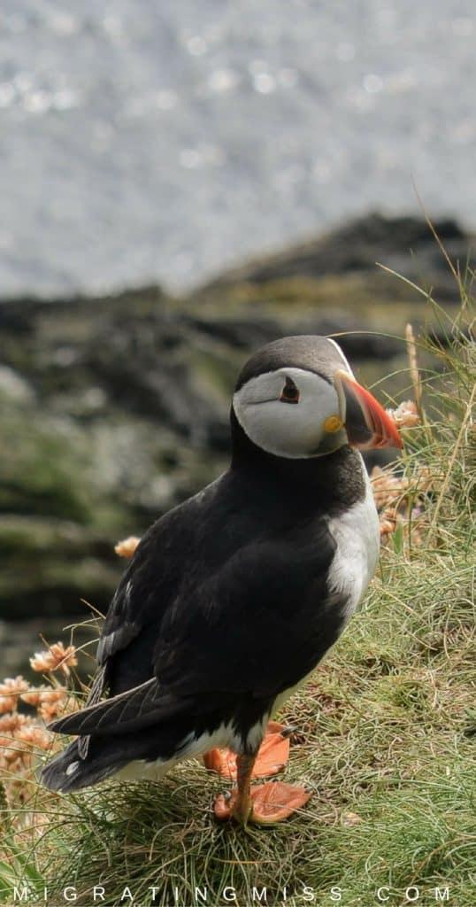 11 Reasons to Visit Shetland, Scotland