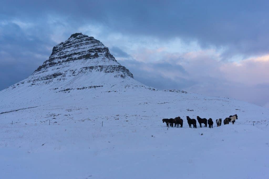 Iceland in winter - Icelandic horses