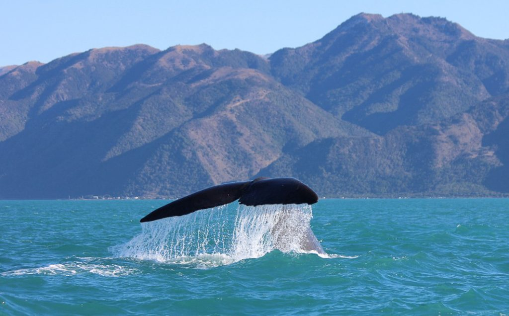 New Zealand Holiday Destinations - Kaikoura