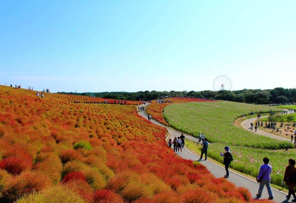 Hitachi Seaside Park Tokyo