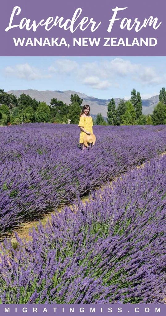 What you need to know to visit Wanaka Lavender Farm in the South Island of New Zealand