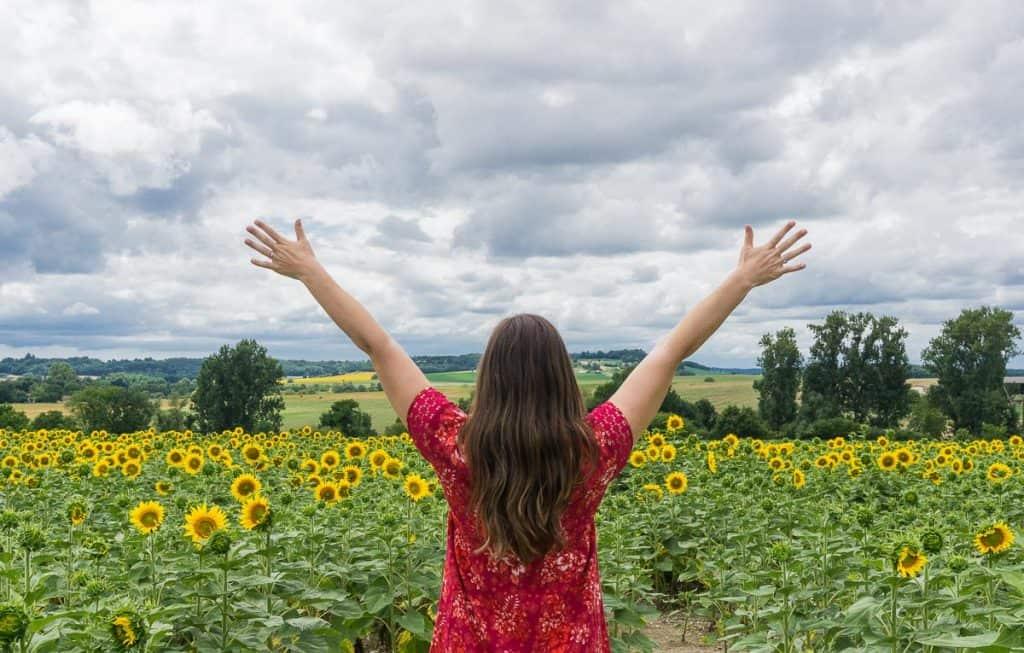 Points of Interest in the Dordogne: Sunflower Fields