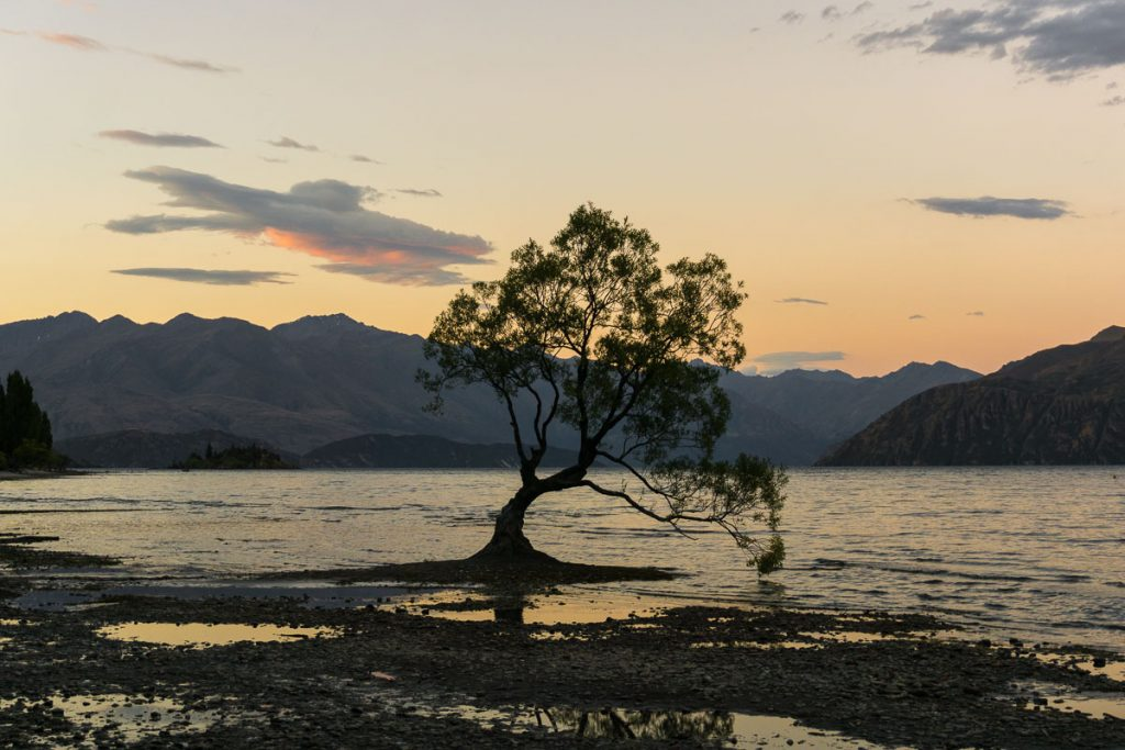 Planning a New Zealand Trip - Wanaka tree