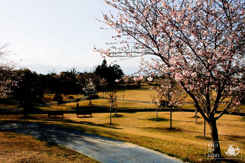 Expat Interview: Moving to Japan