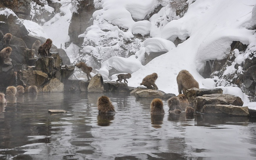Day Trip From Tokyo - Snow Monkeys