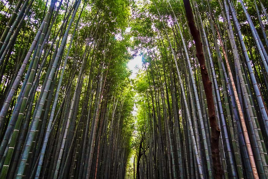 Day Trips from Tokyo - Kyoto