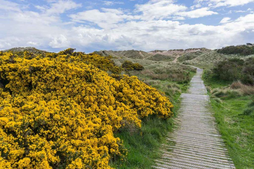 When to drive the North East 250 - Paths at Balmedie
