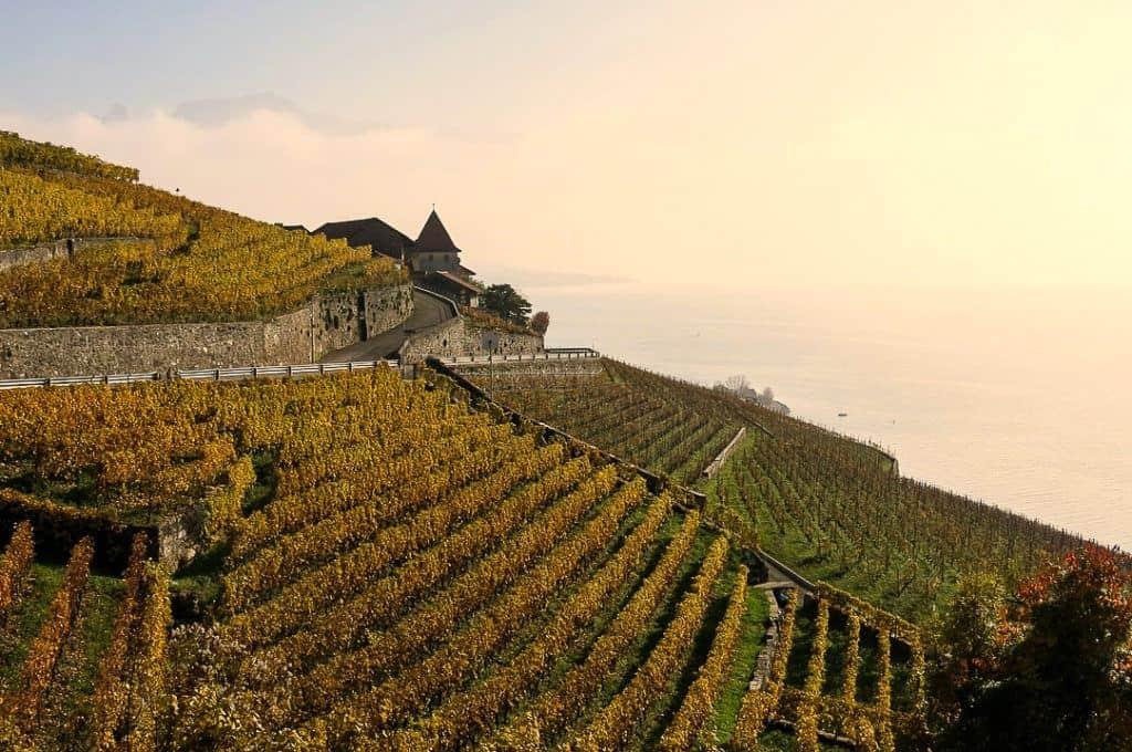 Lavaux Vineyards: Vineyards on mountainside: