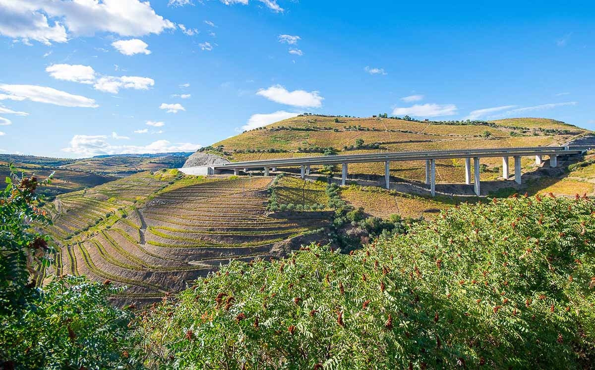 Vineyards in Douro Valley with road behind