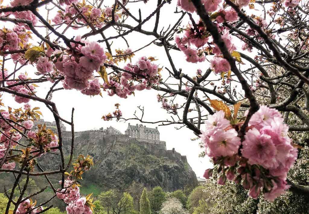 Blossoms framing Edinburgh Castle in Europe in Spring