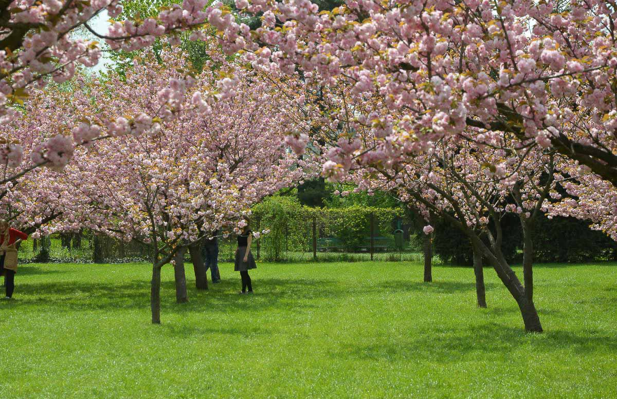 Europe in Spring - Bucharest Blossoms