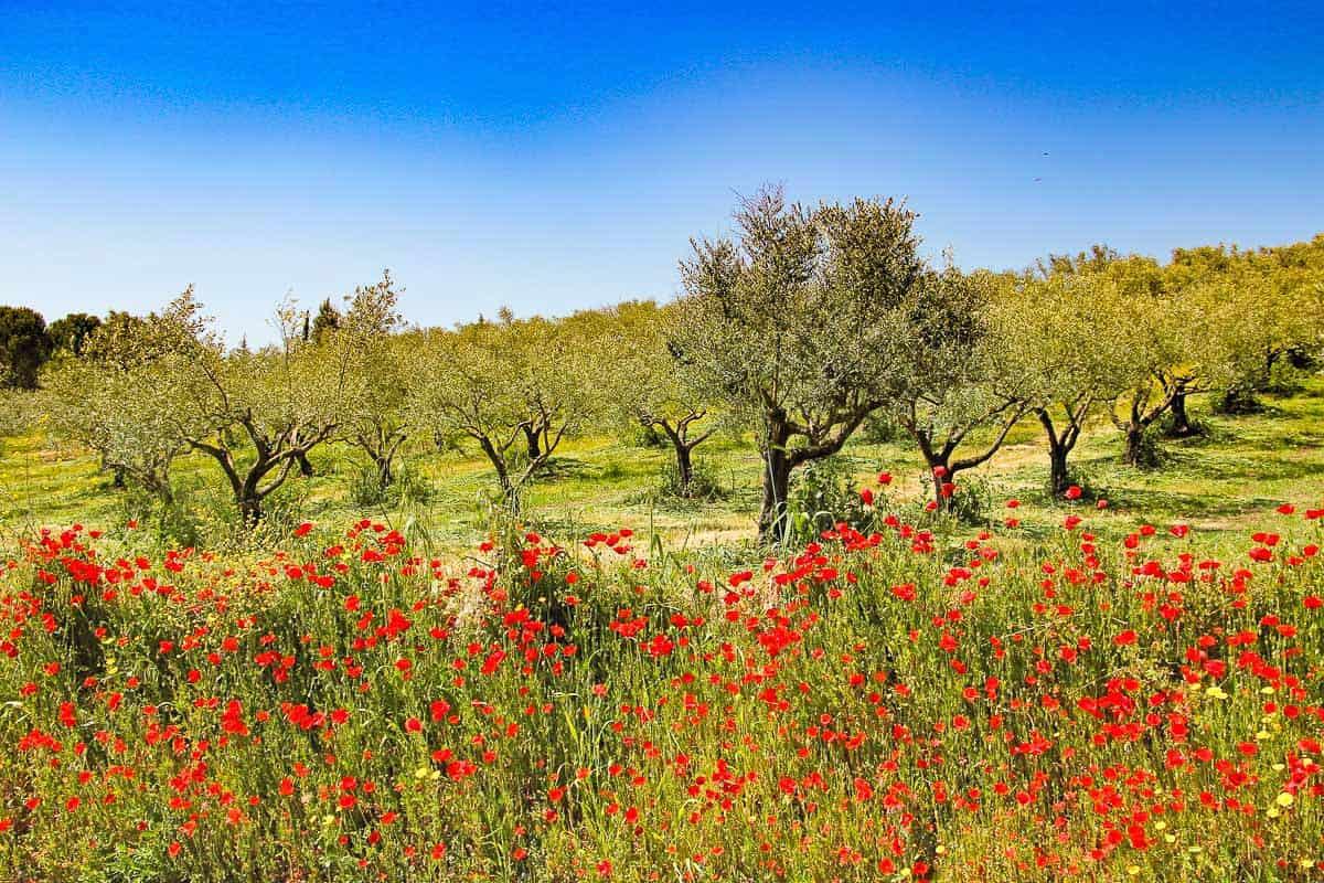 Europe in Spring - Camino de Santiago flowers