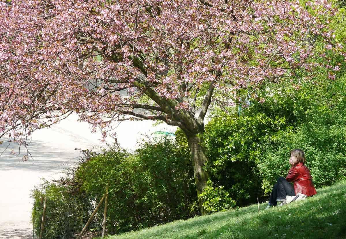 Europe in Spring - Paris blossoms