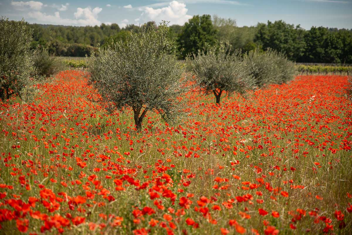 Europe in Spring - Provence flowers in spring