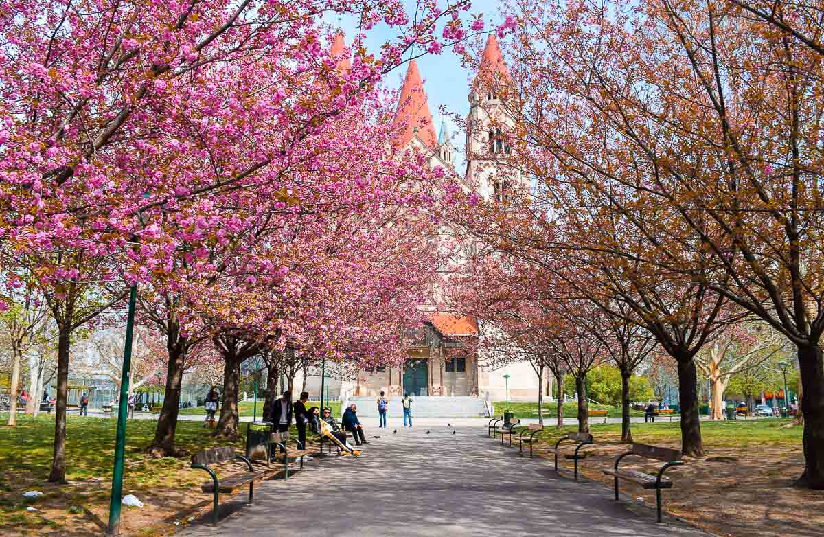 Europe in Spring - Vienna Blossoms