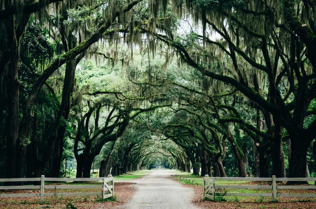 Romantic Places in the USA - Tree Lined driveway Savannah