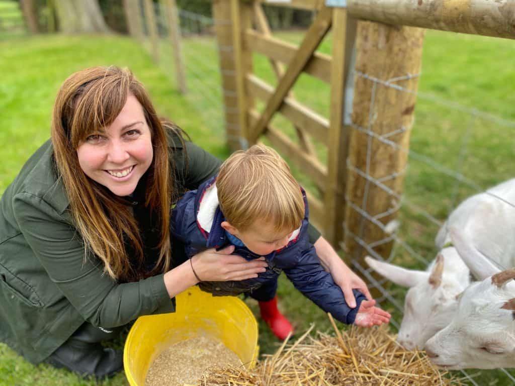 Feeding Goats at Jackson's at Jedburgh Farm
