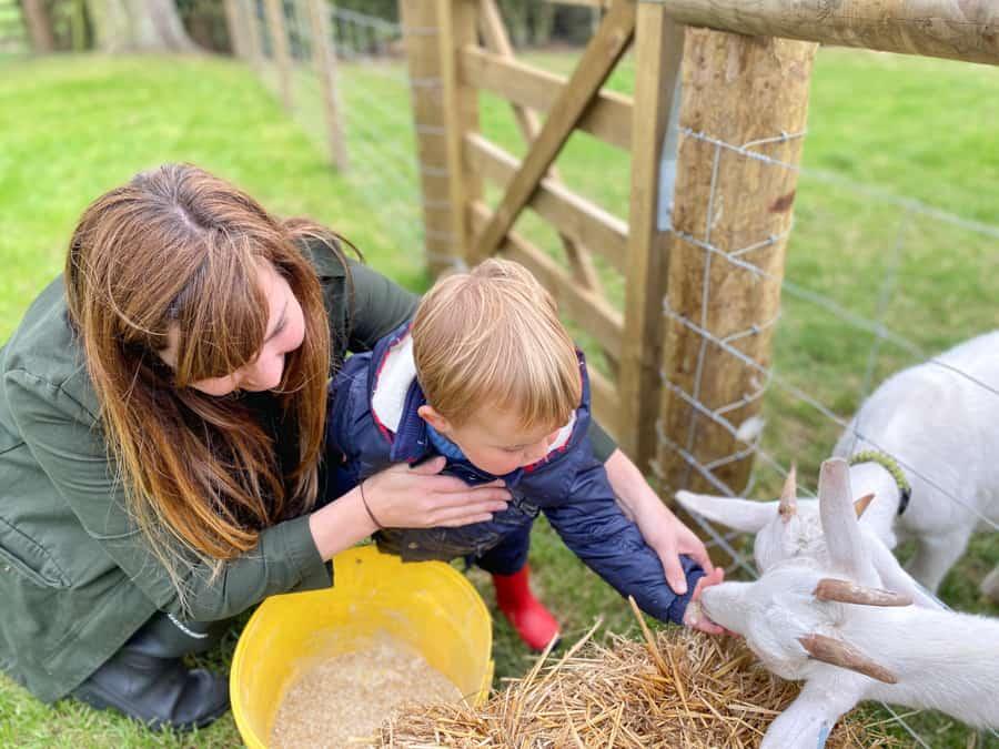 Jacksons at Jedburgh - Toddler and Mum feeding animals
