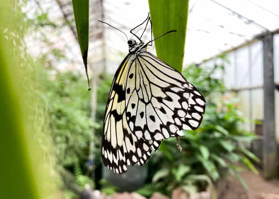 Butterly at Butterfly World Edinburgh
