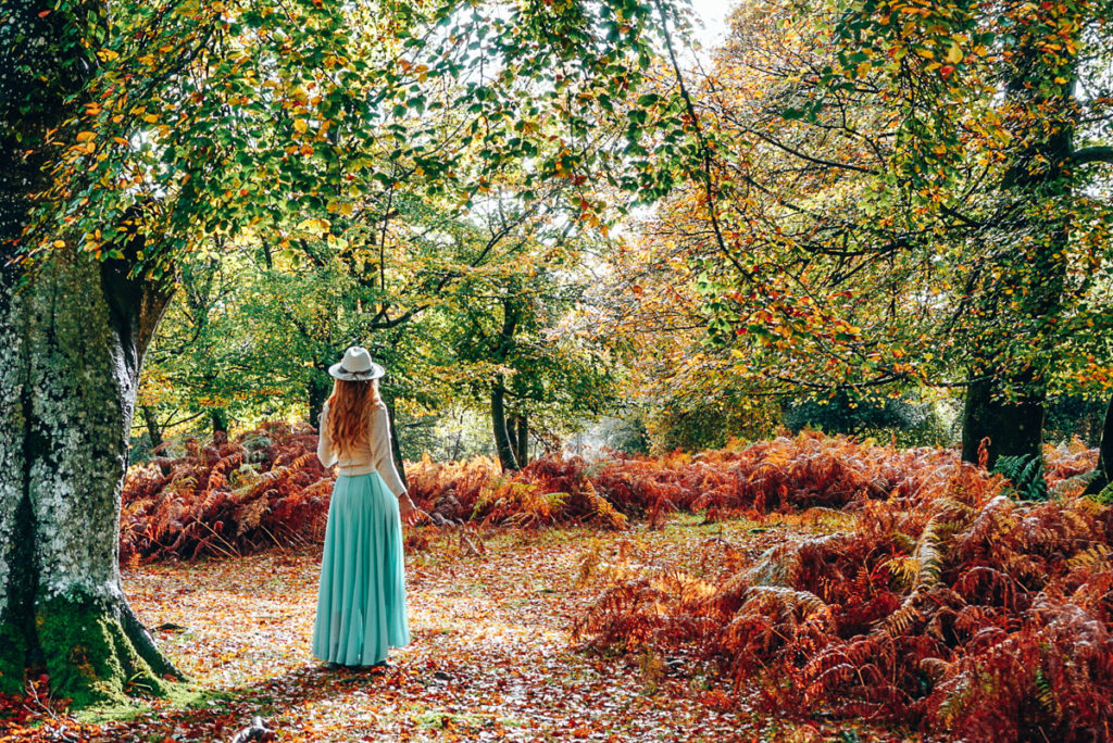 New Forest National - Places to Visit in Park South England